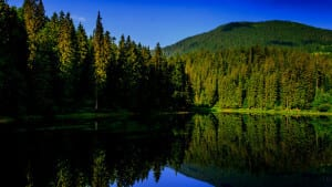 River and forest view